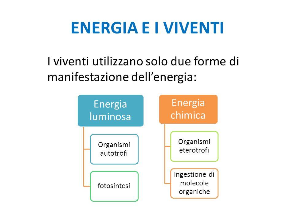 ENERGIA E I VIVENTI I viventi utilizzano solo due forme di manifestazione dellenergia: Energia luminosa Organismi autotrofi fotosintesi Energia chimica Organismi eterotrofi Ingestione di molecole organiche