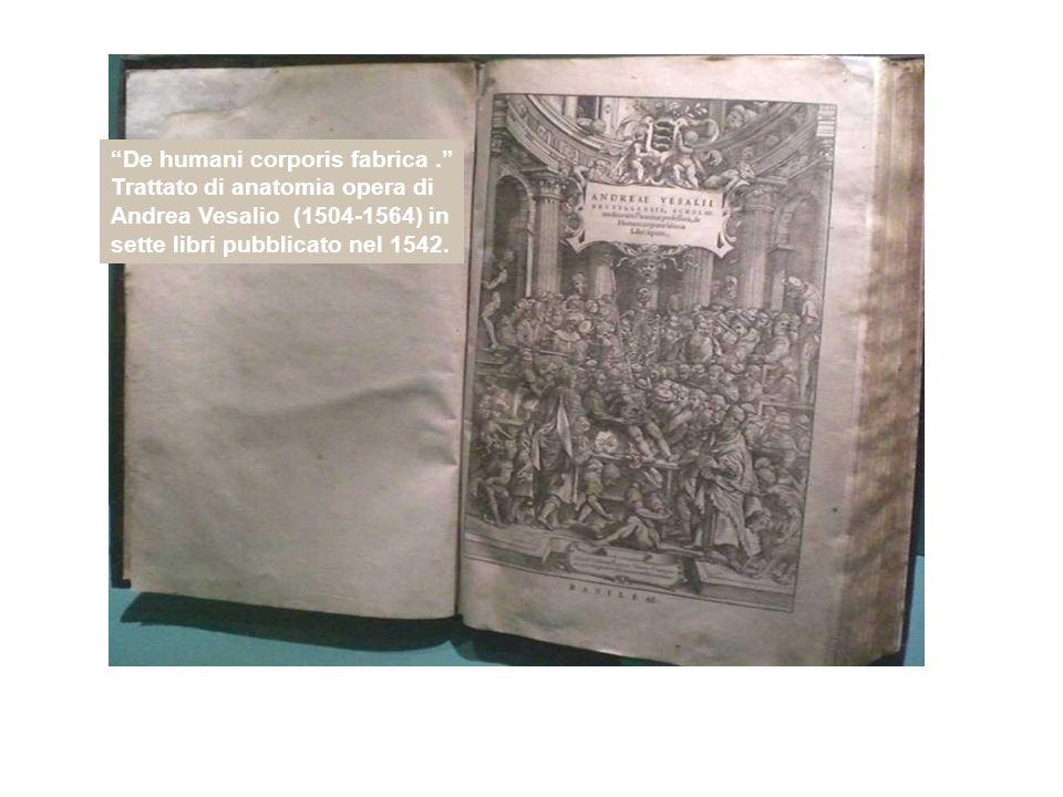 De humani corporis fabrica. Trattato di anatomia opera di Andrea Vesalio (1504-1564) in sette libri pubblicato nel 1542.