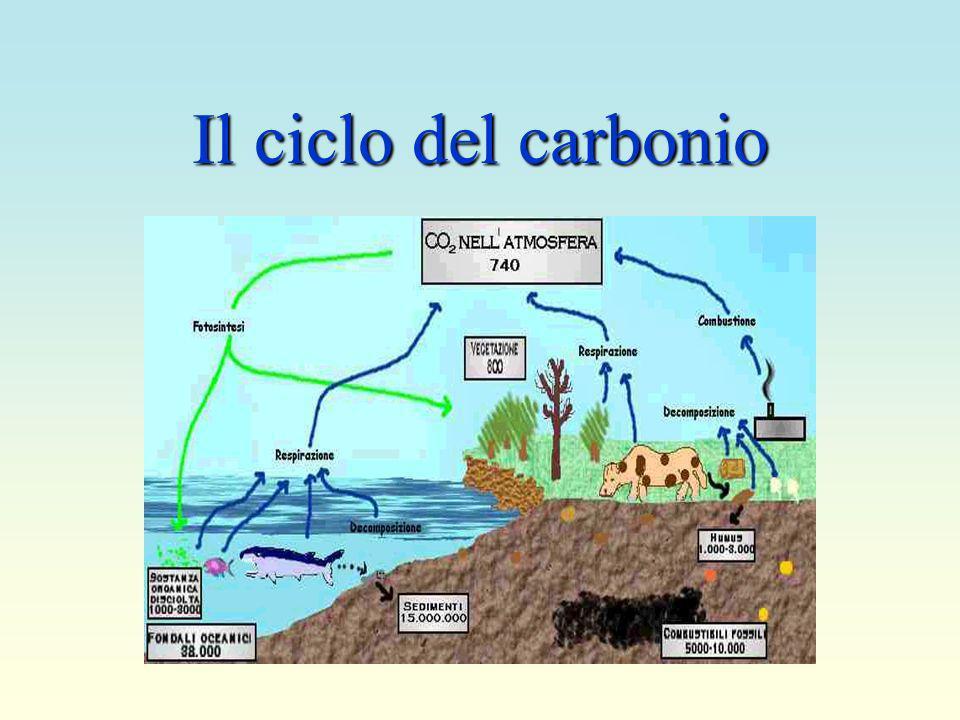 Il ciclo dellacqua