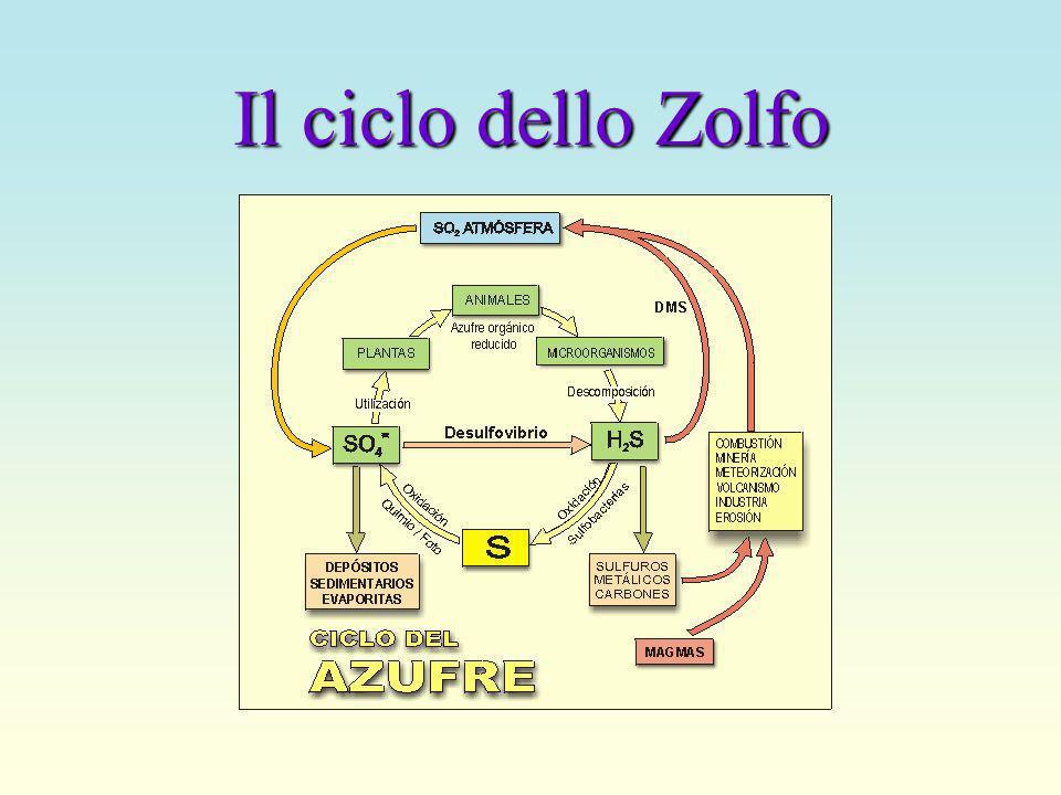 Il ciclo del Fosforo
