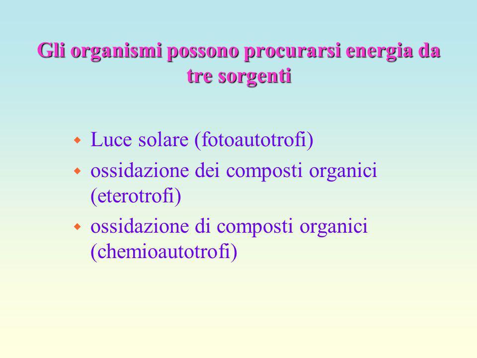 Gli organismi possono procurarsi energia da tre sorgenti w Luce solare (fotoautotrofi) w ossidazione dei composti organici (eterotrofi) w ossidazione di composti organici (chemioautotrofi)