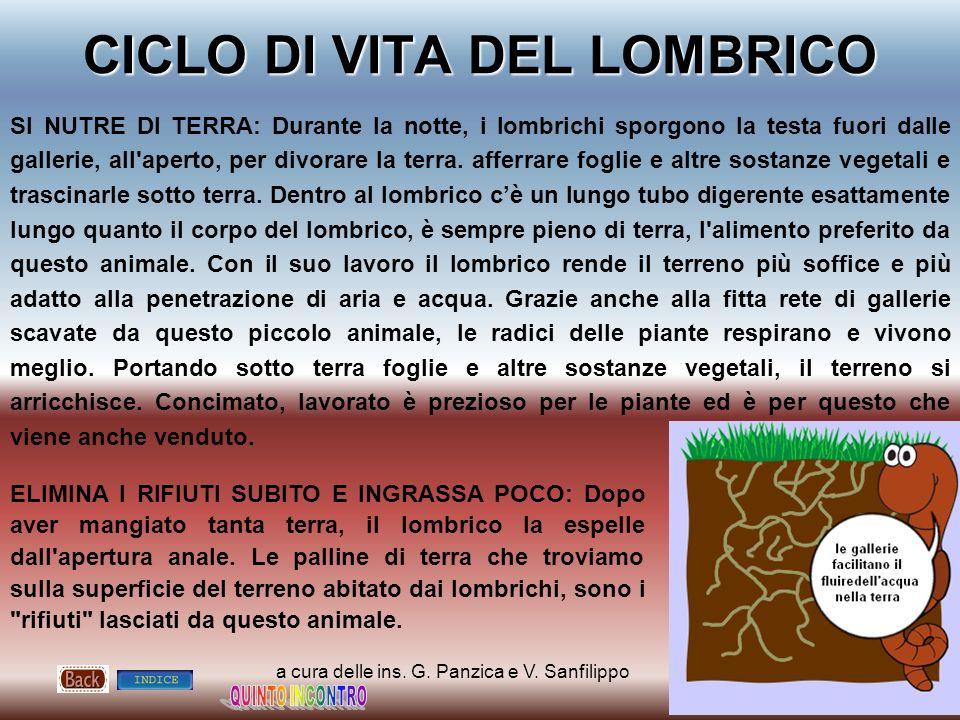 a cura delle ins. G. Panzica e V. Sanfilippo CICLO DI VITA DEL LOMBRICO SI NUTRE DI TERRA: Durante la notte, i lombrichi sporgono la testa fuori dalle