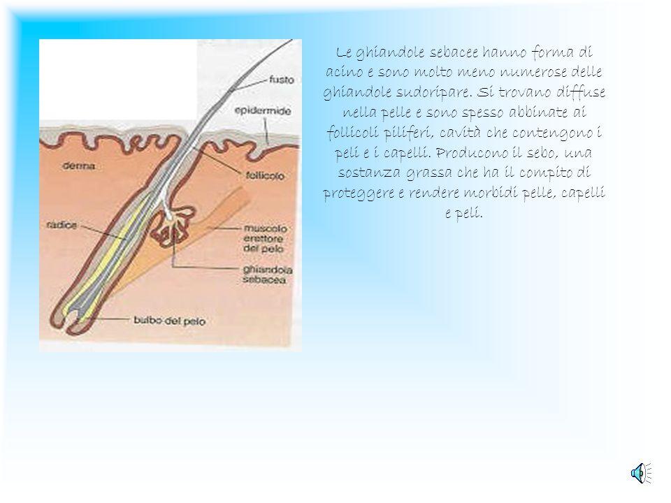 Il Derma Il Derma possiede inoltre una fitta rete di terminazioni nervose e di corpuscoli che servono a percepire stimoli tattici, termici e dolorific