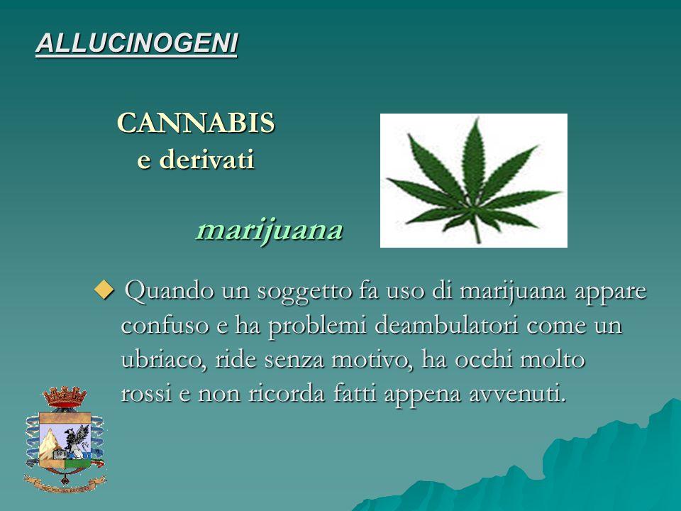 CANNABIS marijuana ALLUCINOGENI Quando un soggetto fa uso di marijuana appare confuso e ha problemi deambulatori come un ubriaco, ride senza motivo, h