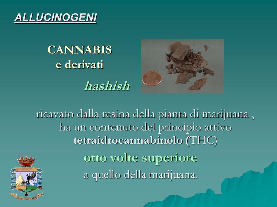 ricavato dalla resina della pianta di marijuana, ha un contenuto del principio attivo tetraidrocannabinolo (THC) ricavato dalla resina della pianta di