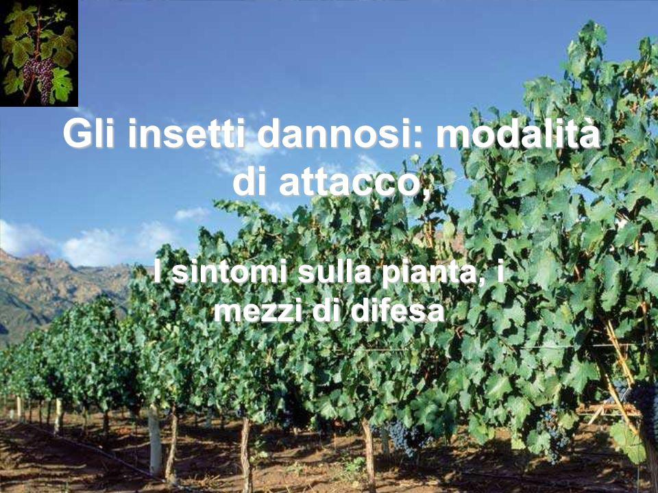 Gli insetti dannosi: modalità di attacco, I sintomi sulla pianta, i mezzi di difesa