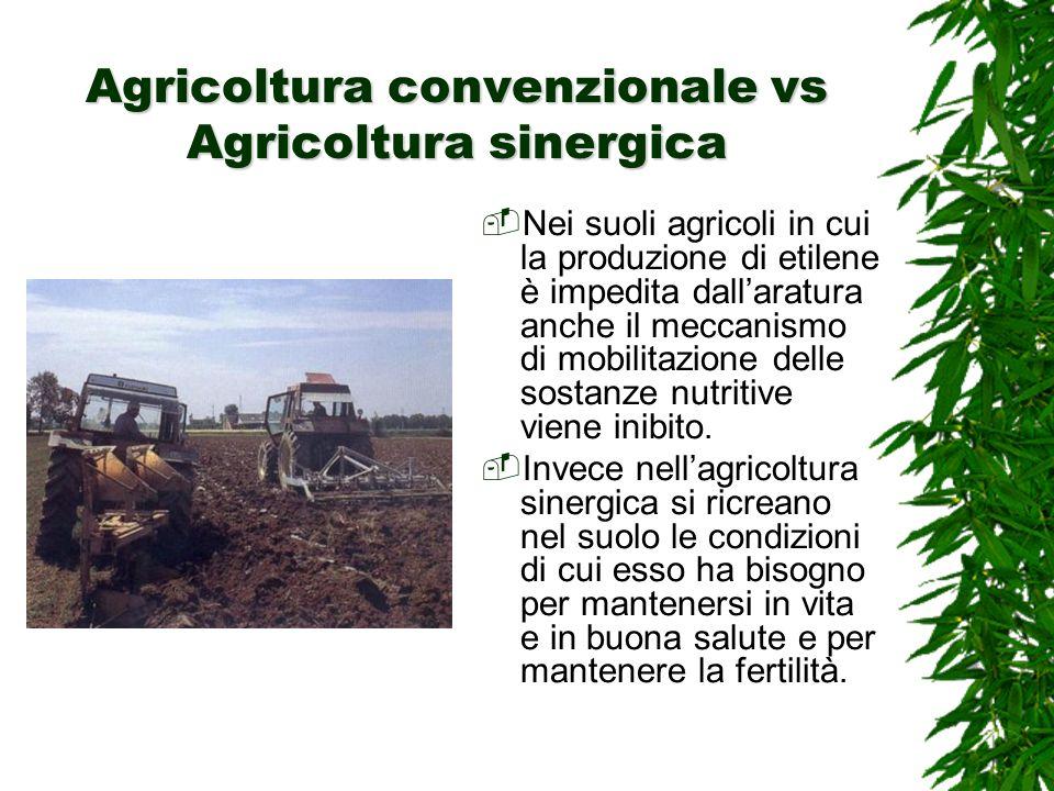 Agricoltura convenzionale vs Agricoltura sinergica Nei suoli agricoli in cui la produzione di etilene è impedita dallaratura anche il meccanismo di mobilitazione delle sostanze nutritive viene inibito.