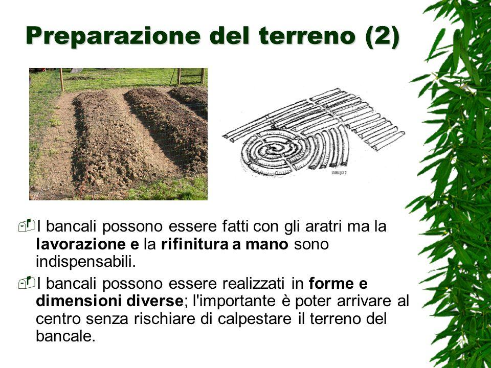 Preparazione del terreno (2) I bancali possono essere fatti con gli aratri ma la lavorazione e la rifinitura a mano sono indispensabili.