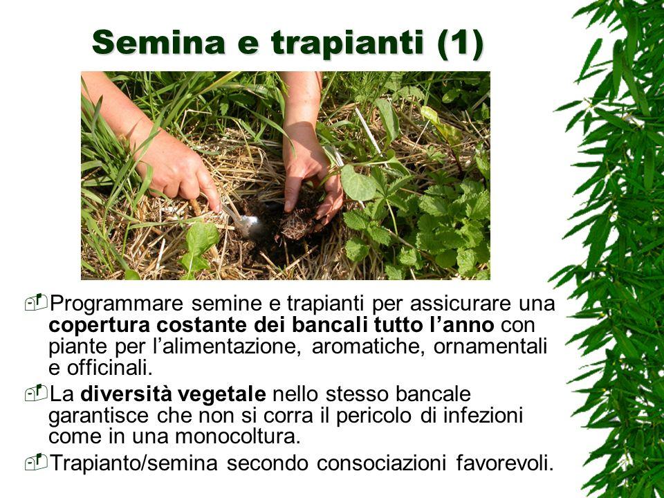 Semina e trapianti (1) Programmare semine e trapianti per assicurare una copertura costante dei bancali tutto lanno con piante per lalimentazione, aromatiche, ornamentali e officinali.