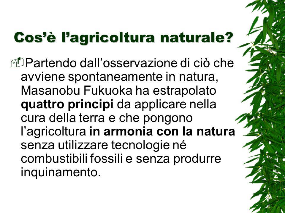 Cosè lagricoltura naturale.