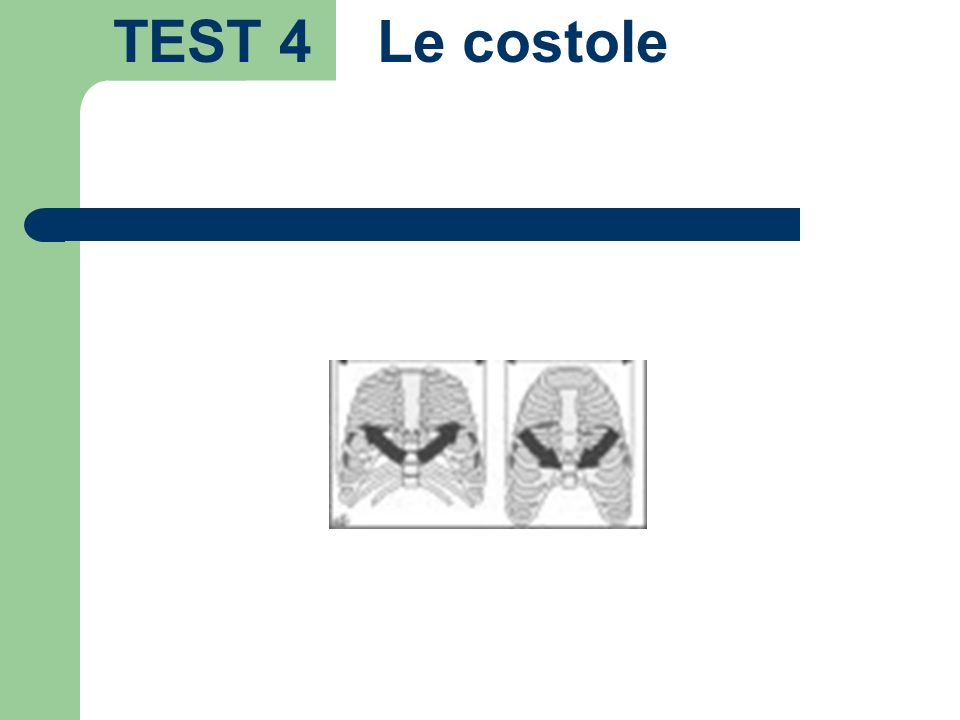 TEST 4 Le costole