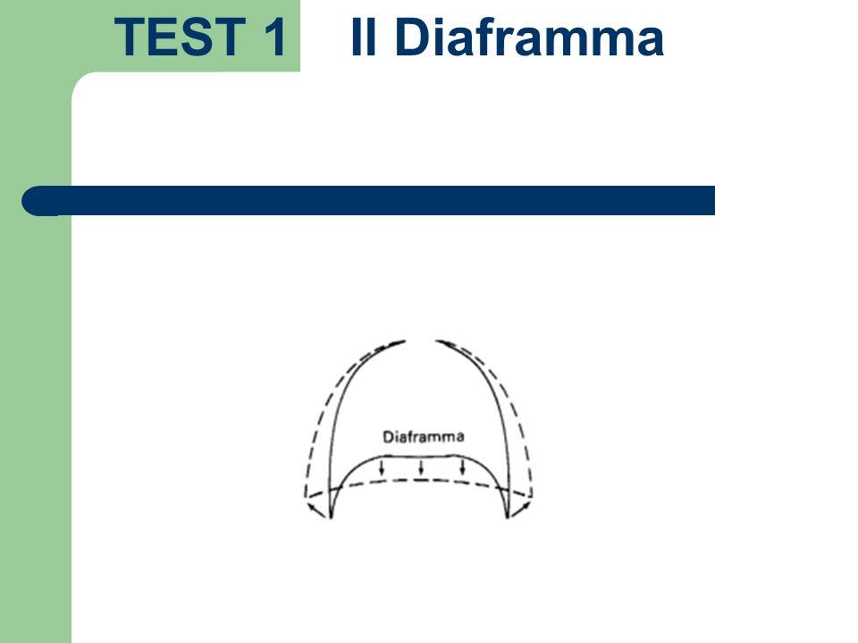 TEST 1 Il Diaframma
