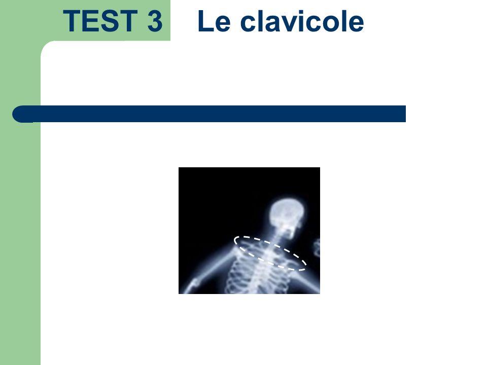 TEST 3 Le clavicole
