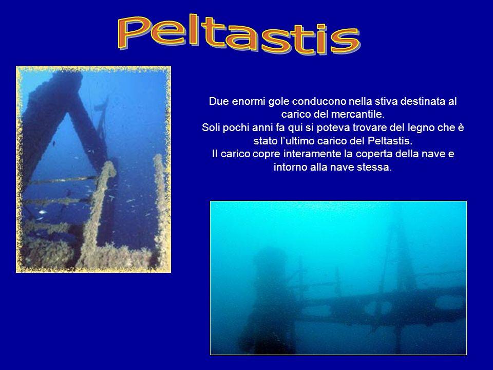 Peltastis (ex Nave Alsterpark) è un relitto accessibile a tutte le categorie di subacquei in quanto la carcassa è solo pochi metri sotto la superficie