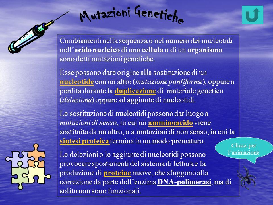 Cambiamenti nella sequenza o nel numero dei nucleotidi nellacido nucleico di una cellula o di un organismo sono detti mutazioni genetiche. Esse posson