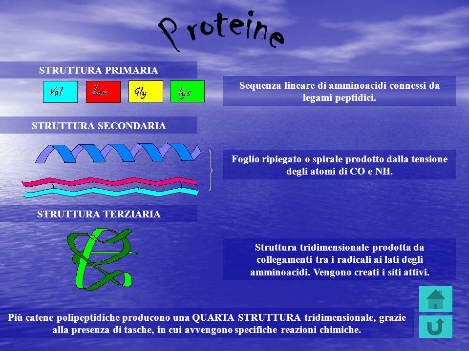 Sequenza lineare di amminoacidi connessi da legami peptidici. STRUTTURA PRIMARIA STRUTTURA SECONDARIA Foglio ripiegato o spirale prodotto dalla tensio