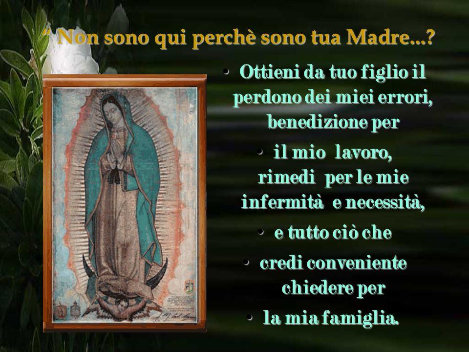 Non sono qui perchè sono tua Madre...? Dacci una prova del tuo amore e bontà e ricevi le nostre preghiere e orazioni. Dacci una prova del tuo amore e