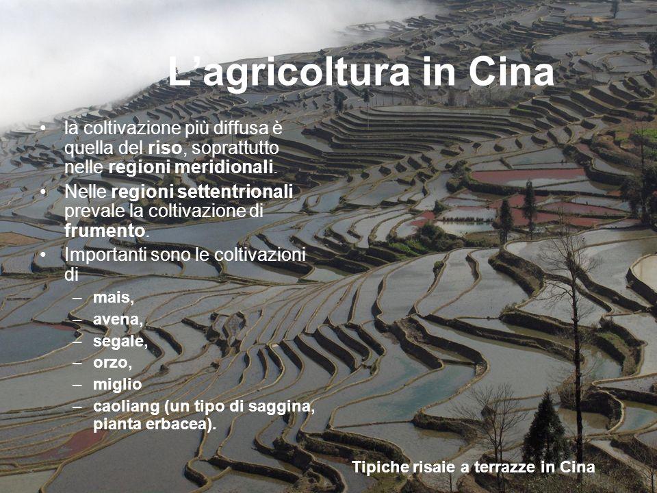 Lagricoltura in Cina la coltivazione più diffusa è quella del riso, soprattutto nelle regioni meridionali. Nelle regioni settentrionali prevale la col