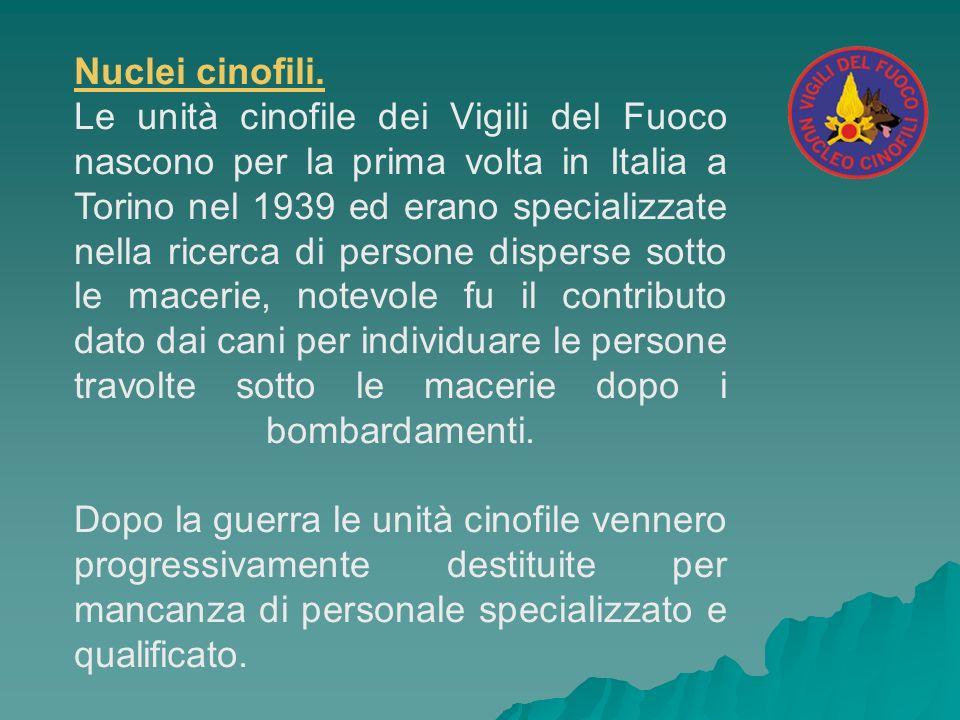 Nuclei cinofili. Le unità cinofile dei Vigili del Fuoco nascono per la prima volta in Italia a Torino nel 1939 ed erano specializzate nella ricerca di