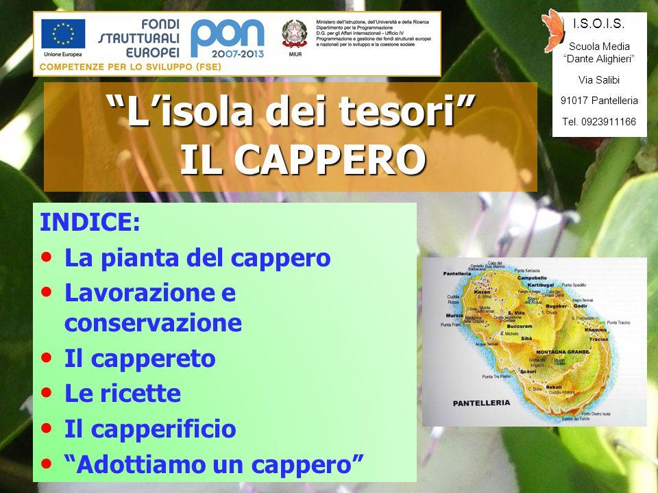 INDICE: La pianta del cappero Lavorazione e conservazione Il cappereto Le ricette Il capperificio Adottiamo un cappero Lisola dei tesori IL CAPPERO I.