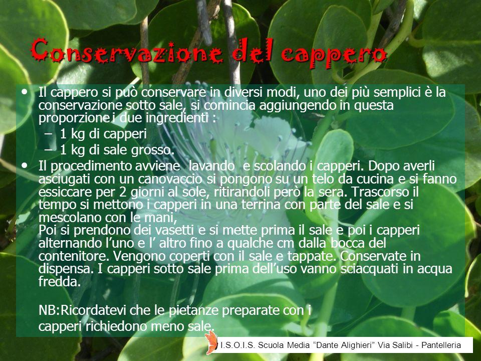 Conservazione del cappero Il cappero si può conservare in diversi modi, uno dei più semplici è la conservazione sotto sale, si comincia aggiungendo in