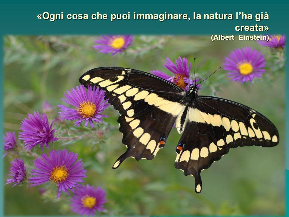 «Ogni cosa che puoi immaginare, la natura lha già creata» (Albert Einstein)