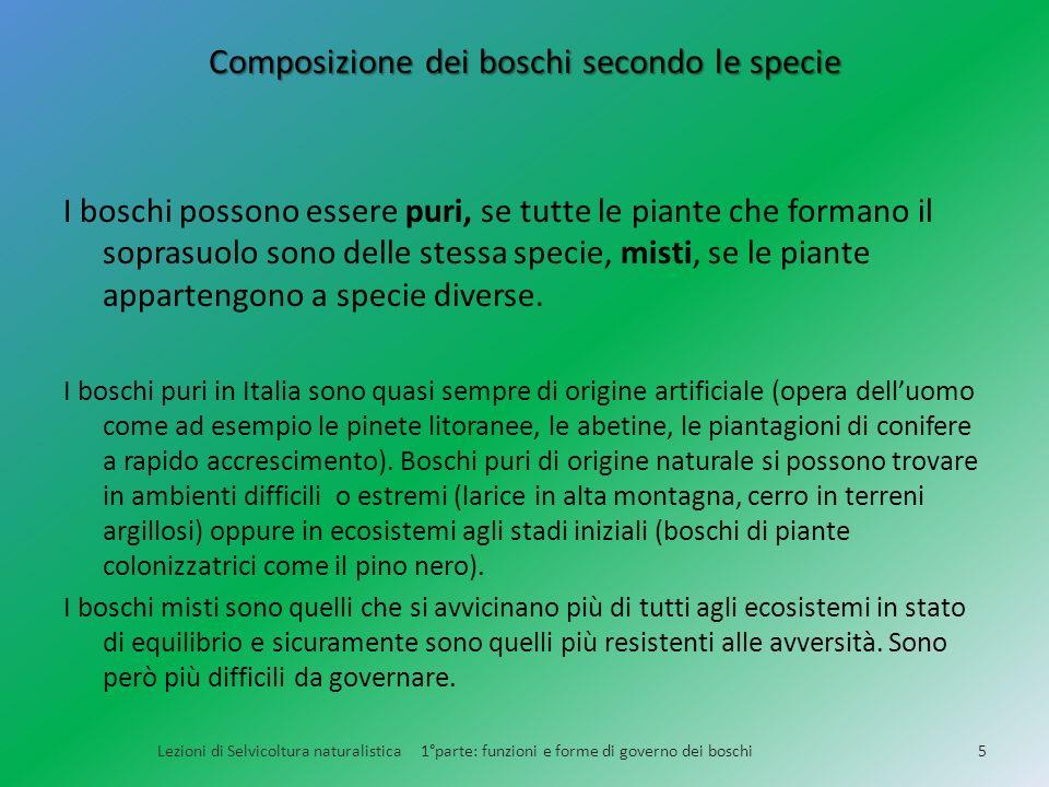 Composizione dei boschi secondo le specie I boschi possono essere puri, se tutte le piante che formano il soprasuolo sono delle stessa specie, misti,