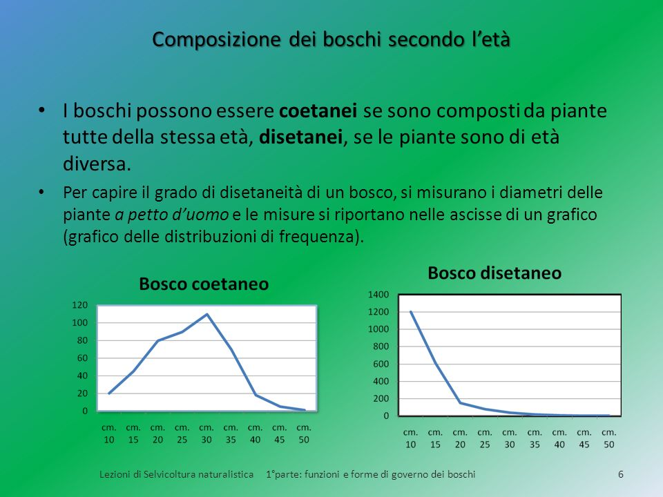 Composizione dei boschi secondo letà I boschi possono essere coetanei se sono composti da piante tutte della stessa età, disetanei, se le piante sono