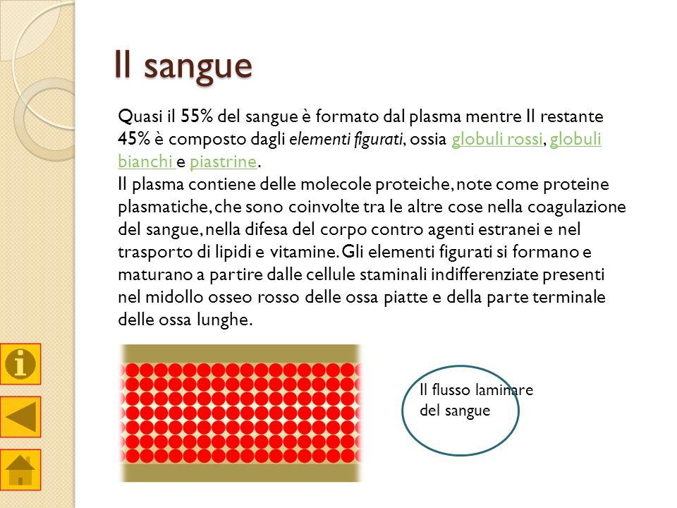 Il sangue Quasi il 55% del sangue è formato dal plasma mentre Il restante 45% è composto dagli elementi figurati, ossia globuli rossi, globuli bianchi