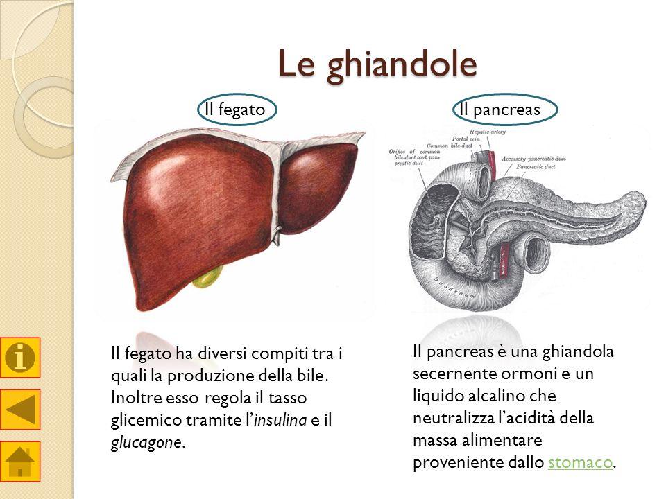 Le ghiandole Il fegatoIl pancreas Il fegato ha diversi compiti tra i quali la produzione della bile. Inoltre esso regola il tasso glicemico tramite li