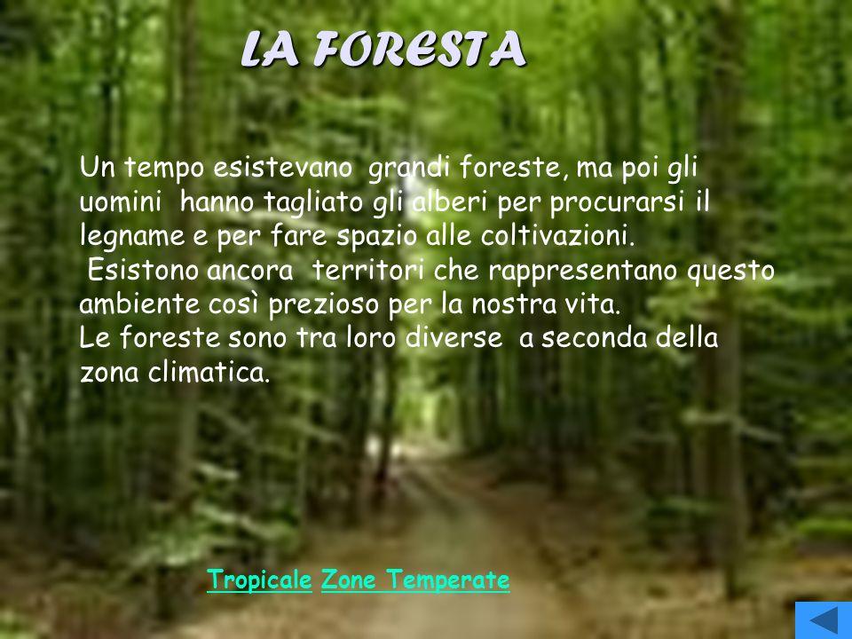 LA FORESTA Un tempo esistevano grandi foreste, ma poi gli uomini hanno tagliato gli alberi per procurarsi il legname e per fare spazio alle coltivazioni.