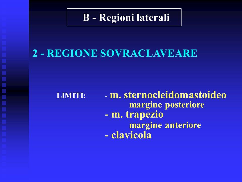 2 - REGIONE SOVRACLAVEARE LIMITI:- m. sternocleidomastoideo margine posteriore - m. trapezio margine anteriore - clavicola B - Regioni laterali
