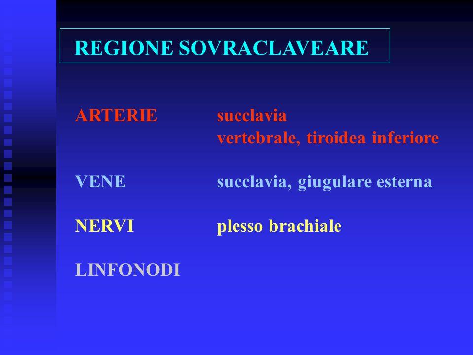 ARTERIEsucclavia vertebrale, tiroidea inferiore VENEsucclavia, giugulare esterna NERVIplesso brachiale LINFONODI REGIONE SOVRACLAVEARE