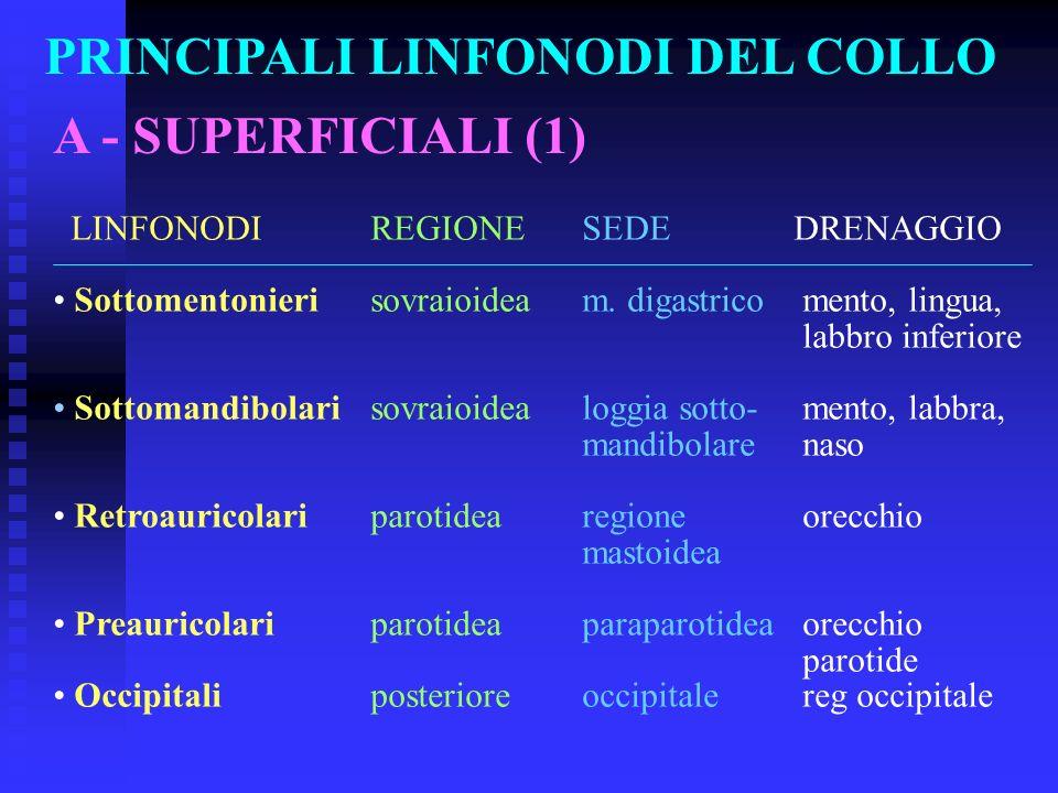PRINCIPALI LINFONODI DEL COLLO A - SUPERFICIALI (1) LINFONODIREGIONESEDEDRENAGGIO Sottomentonierisovraioideam. digastrico mento, lingua, labbro inferi