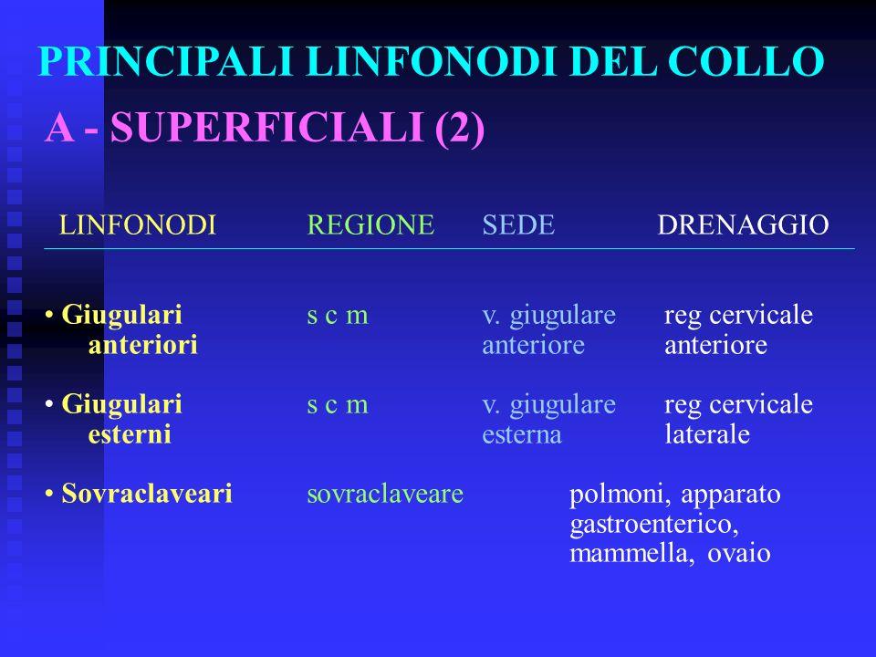 PRINCIPALI LINFONODI DEL COLLO A - SUPERFICIALI (2) LINFONODIREGIONESEDEDRENAGGIO Giugulari s c mv. giugulare reg cervicale anteriorianteriore anterio