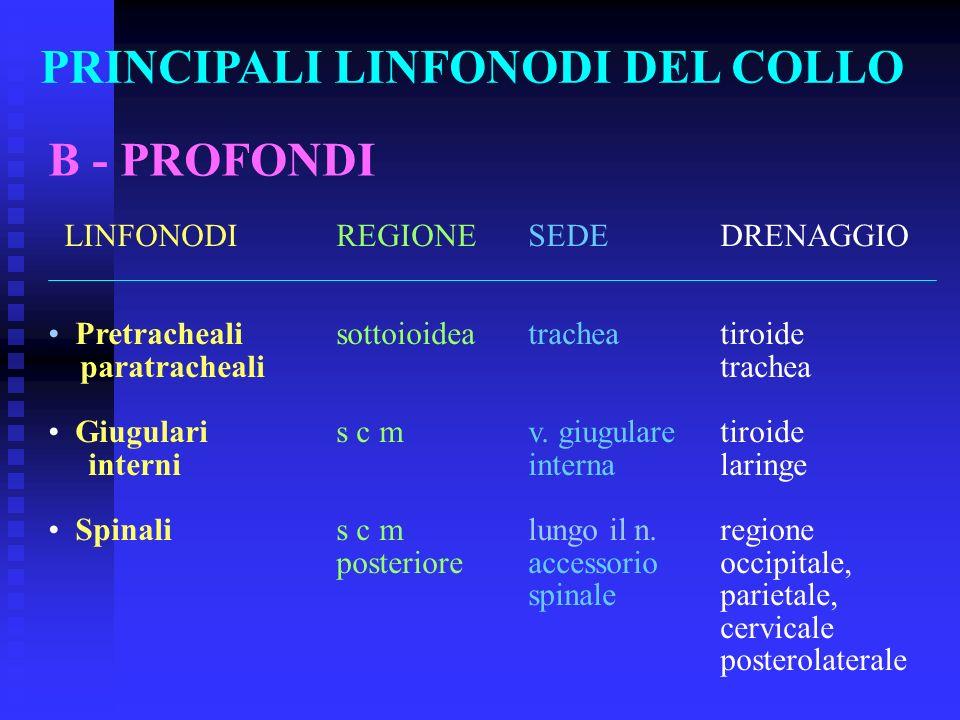 PRINCIPALI LINFONODI DEL COLLO B - PROFONDI LINFONODIREGIONESEDEDRENAGGIO Pretrachealisottoioideatracheatiroide paratrachealitrachea Giugularis c m v.
