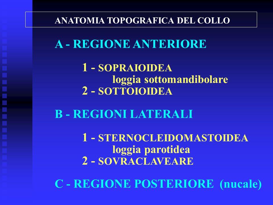 ANATOMIA TOPOGRAFICA DEL COLLO A - REGIONE ANTERIORE 1 - SOPRAIOIDEA loggia sottomandibolare 2 - SOTTOIOIDEA B - REGIONI LATERALI 1 - STERNOCLEIDOMAST