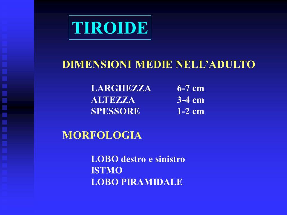 DIMENSIONI MEDIE NELLADULTO LARGHEZZA6-7 cm ALTEZZA3-4 cm SPESSORE1-2 cm MORFOLOGIA LOBO destro e sinistro ISTMO LOBO PIRAMIDALE TIROIDE