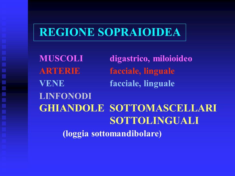 REGIONE SOPRAIOIDEA MUSCOLIdigastrico, miloioideo ARTERIEfacciale, linguale VENEfacciale, linguale LINFONODI GHIANDOLE SOTTOMASCELLARI SOTTOLINGUALI (