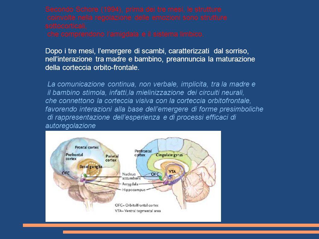 Secondo Schore (1994), prima dei tre mesi, le strutture coinvolte nella regolazione delle emozioni sono strutture sottocorticali, che comprendono lami
