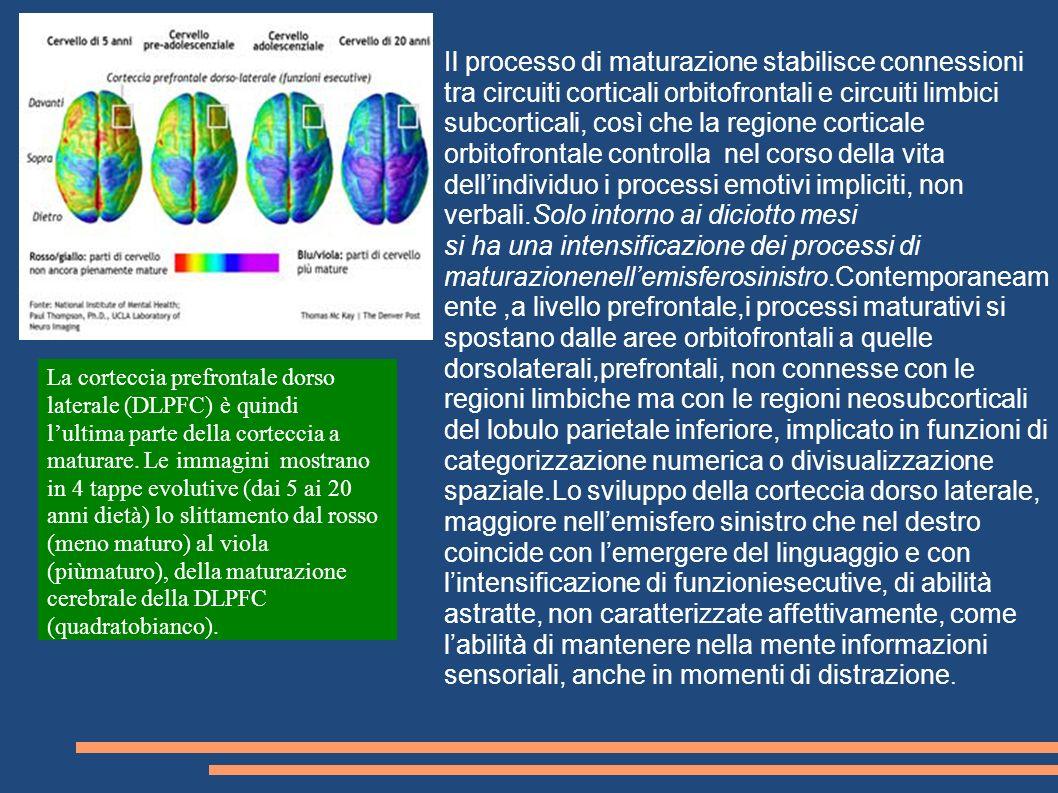 Il processo di maturazione stabilisce connessioni tra circuiti corticali orbitofrontali e circuiti limbici subcorticali, così che la regione corticale