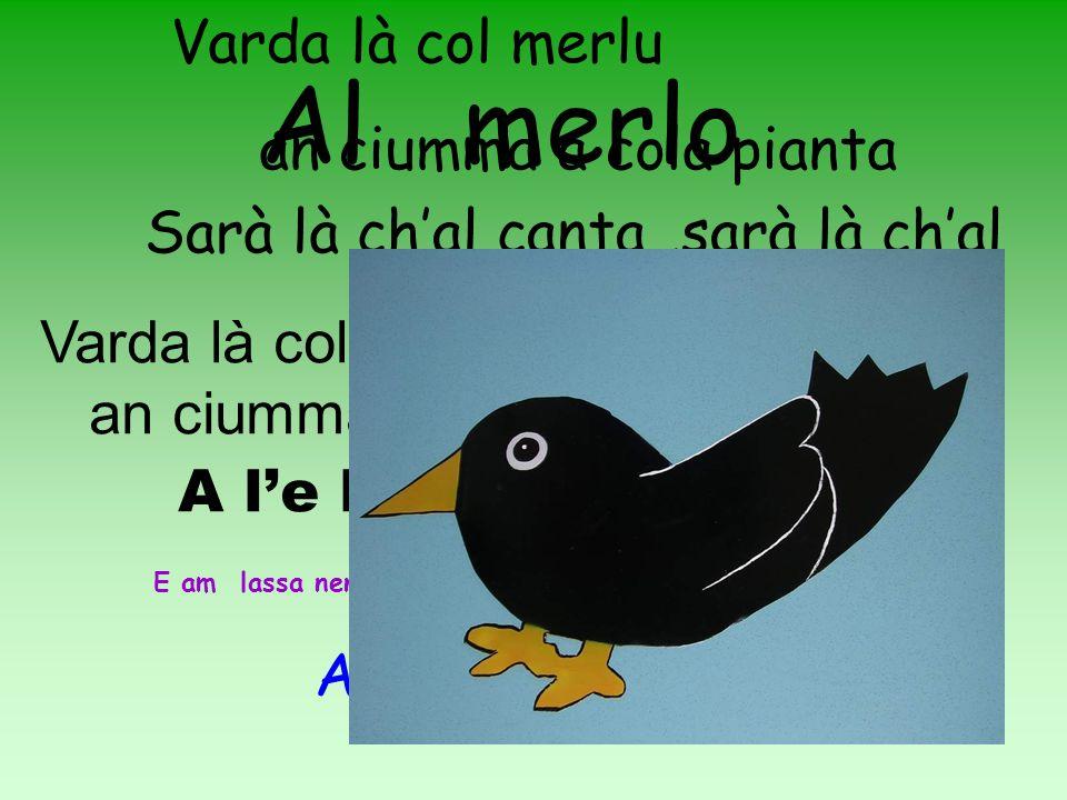 Al merlo Varda là col merlu an ciumma a cola pianta Sarà là chal canta,sarà là chal canta..