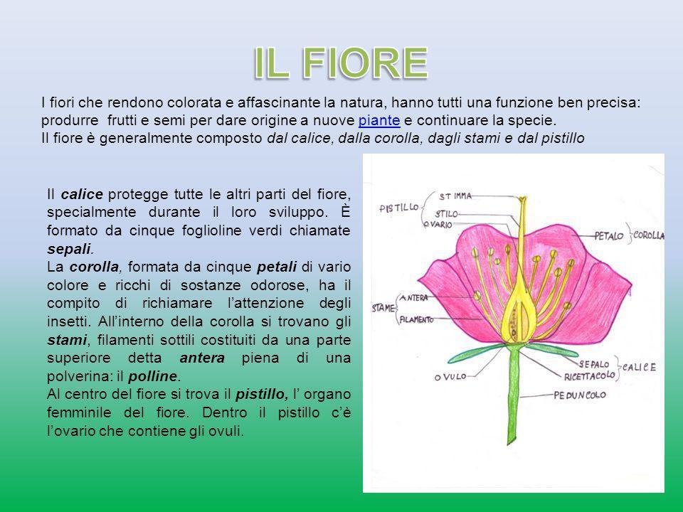 Il vento, lacqua e gli insetti trasportano il polline dagli stami di un fiore sui pistilli di altri fiori: avviene così limpollinazione.