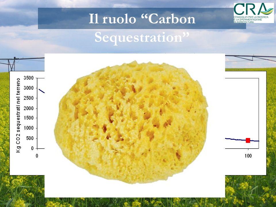 Il ruolo Carbon Sequestration