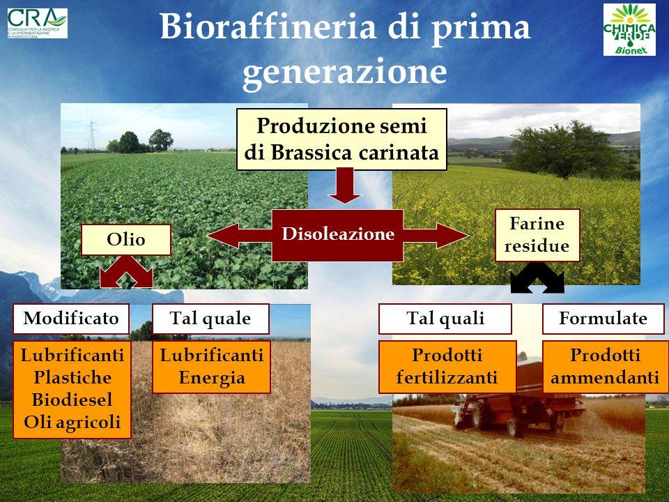 Bioraffineria di prima generazione Produzione semi di Brassica carinata Formulate Farine residue Disoleazione Prodotti ammendanti Tal quali Prodotti fertilizzanti Tal quale Lubrificanti Plastiche Biodiesel Oli agricoli Modificato Lubrificanti Energia Olio