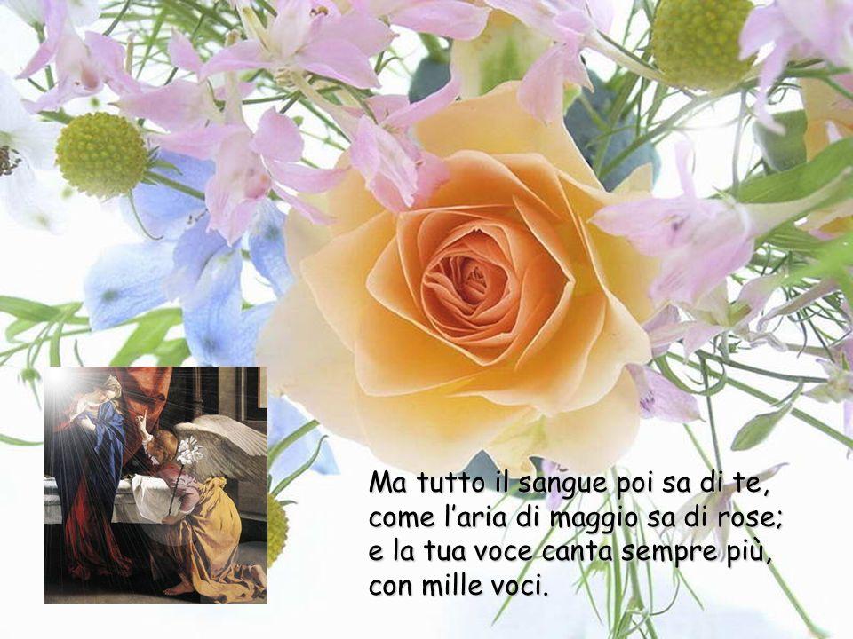 Vergine fedele Tu vieni in cuore, chi sa da dove, come a marzo lodore di fiori nascosti. Tu vieni come la luce dellaurora incerta e bianca sul filo de