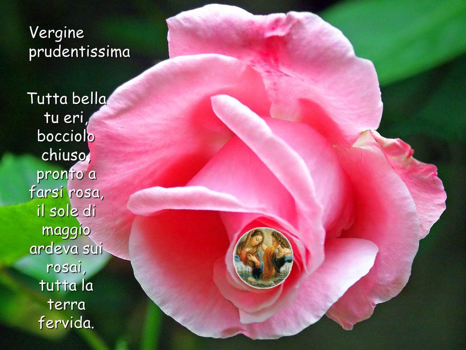 Vergine prudentissima Tutta bella tu eri, bocciolo chiuso, pronto a farsi rosa, il sole di maggio ardeva sui rosai, tutta la terra fervida.