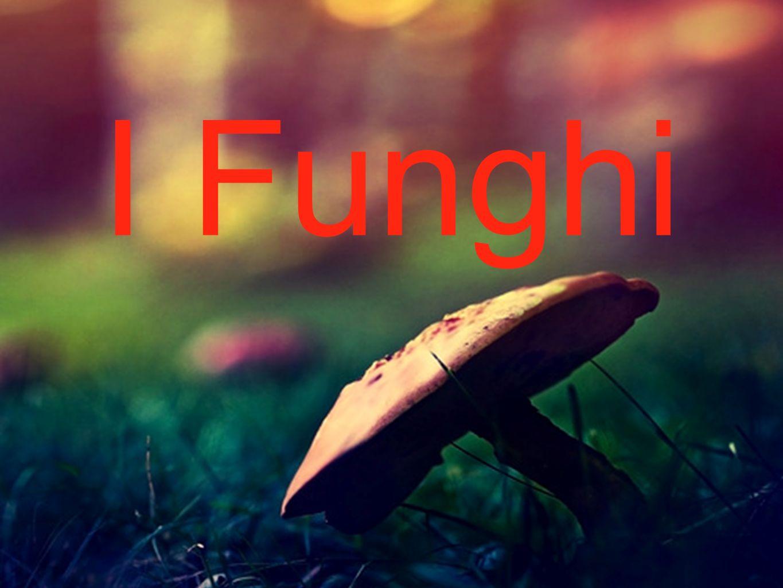 La Varietà dei Funghi -Gli Zigomiceti per lo più terrestri, si comportano da saprofiti e parassiti.