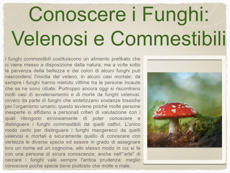 Conoscere i Funghi: Velenosi e Commestibili I funghi commestibili costituiscono un alimento prelibato che ci viene messo a disposizione dalla natura; ma a volte sotto la parvenza della bellezza e dei colori di alcuni funghi può nascondersi l insidia del veleno, in alcuni casi mortale; da sempre i funghi hanno mietuto vittime tra le persone incaute che se ne sono cibate.