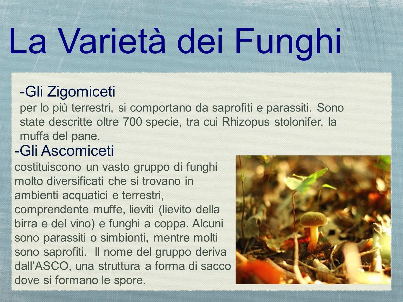 La Varietà dei Funghi -Gli Zigomiceti per lo più terrestri, si comportano da saprofiti e parassiti. Sono state descritte oltre 700 specie, tra cui Rhi